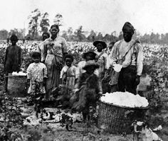 Slave Family In Cotton Field near Savannah, Georgia in A new book has shed new light on the struggles of freed slaves in the U. after the end of the Civil War 'The end of slavery led to hunger and death for millions of black Americans' Black History Facts, Us History, African American History, Slavery History, History Images, History Channel, History Books, Picking Cotton, African History