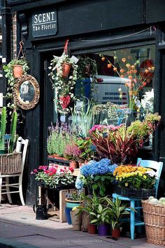 They always have the prettiest, freshest flowers at SCENT. All the locals shop here.