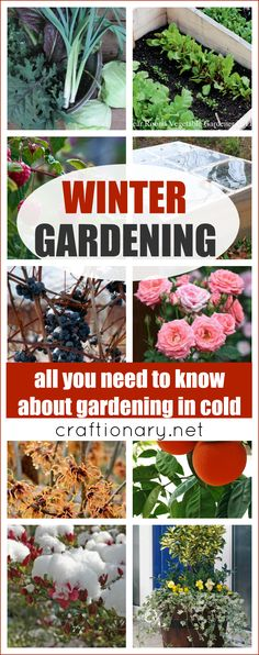 Solve your gardening problems and protect your plants, flowers and trees with winter gardening tips, tricks, solutions and plantation ideas to grow in cold.