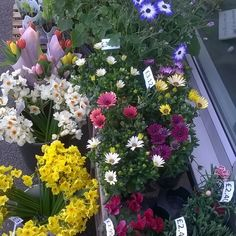 Lots of lovely plants and gifts for the home and garden