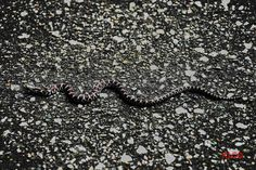 Snake, Nature, Animals, Animales, Animaux, Snakes, The Great Outdoors, Mother Nature, Animal