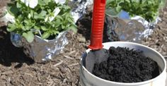 lifeme: COMPOST:COME FARE UN BUON COMPOST DOMESTICO FAI DA...