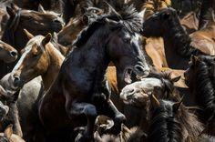 Fotografía de Javier Arcenillas na Rapa das Bestas de Sabucedo. Foto: Javier Arcenillas.