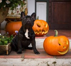 Halloween can be a fun time of year for us humans, but it can be a nightmare for our dogs. The strange sights and sounds of the holiday can spook even the calmest canine. These tips can help make Halloween stress-free. Halloween Cans, Spirit Halloween, Halloween Stuff, Halloween Safety Tips, Animal Rescue Stories, Healthy Pets, Pet Safe, Cat Treats, Your Pet