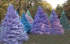 flocked purple christmas trees