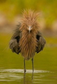 bad feather day?