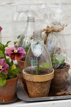Empty plastic soda bottles can be used to cover planters to work as mini green houses.