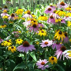 """Instructions for planting wildflowers in a large area - prepare soil. spread seeds (don't bury) using a seed spreader. water until the seedlings are 4'6"""" tall. after that they survive on natural rain.  EASY to grow!"""