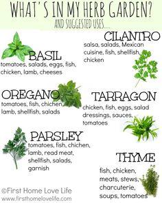 Creating a Kitchen Herb Garden | First Home Love Life #herbs #kitchengarden