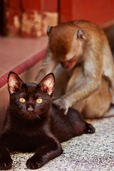 Giving massages is physically demanding. Maybe I will get some kind of helper monkey to give them for me... ~ Houston Foodlovers