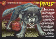 Name: Dire Wolf Category: Monsters of the Past Card Number: 91 Front: Dire Wolf Monsters of the Past Card 91 front Back: Dire Wolf Monsters of the Past Card 91 back Trading Card: Prehistoric World, Prehistoric Creatures, Mythological Creatures, Mythical Creatures, Dire Wolf Size, Wolf Pack Quotes, Wolf Name, Wolf Spirit Animal, Wild Creatures