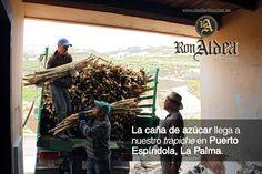 Reportaje Fotográfico Ron Aldea - Javier Sebastián - Diseño GráficoJavier Sebastián – Diseñador gráfico freelance – Diseño web – Imagen Corporativa – Redes Sociales – La Palma – Santa Cruz de Tenerife
