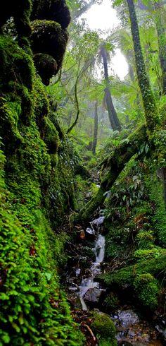 Rimutaka Forest Park, near Wellington, The North Island, New Zealand