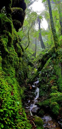 Rimutaka Forest Park, near Wellington, The North Island, New Zealand