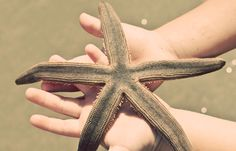 Pawleys island beach Star fish  http://www.homeaway.com/vacation-rental/p347250