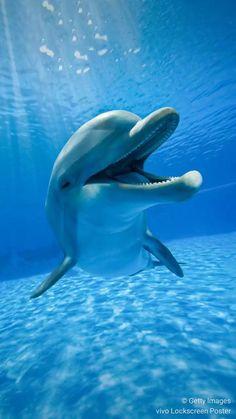 Dolphins Animal, Whale, Animals, Whales, Animales, Animaux, Animal, Animais