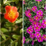 12 φυτά για κρεμαστές γλάστρες και καλάθια Gardening, Plants, Lawn And Garden, Plant, Planets, Horticulture
