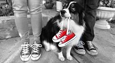https://www.facebook.com/photo.php?fbid=10103193816612860  Pregnancy announcement with dog and shoes!