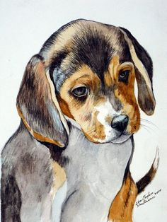 Beagle Puppy watercolor by Christopher Shellhammer