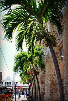 Key West....Spring Break 2014????