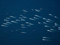 Aves fazem mergulho coletivo em fiorde norueguês neste domingo (16) (Foto: AFP/Jonathan Nackstrand)