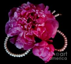 'Peonies and Pearls 2' Fine Art Photography/Digital Art by Margaret Newcomb - Photography and digital art of a jumbo sized pink peony flower sitting atop an ivory pearl necklace. There is a smaller peony bud in the lower corner. Pink peonies, ivory pearls on a solid black background. This piece is one of several in the collection of Peonies and Pearls.