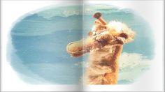 Песня жирафа из мультфильма - Зачем верблюду апельсин?