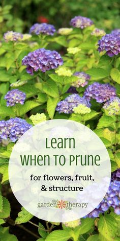 """There is a """"best"""" time to prune various plants and it's not always the same. Learning when to prune can be confusing when there are different rules for many different plants, and even differing rules that vary by cultivar! This """"When to Prune"""" guide takes away all of that confusion by looking at the basics of how plants grow and using that as your foundation."""