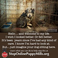 Imagine your dog living this life. Are you ready to help now? Learn what you can do at http://www.stoponlinepuppymills.org/
