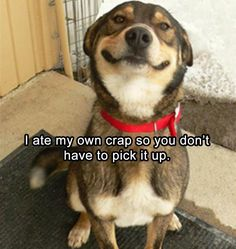 funny-animal-pictures-19
