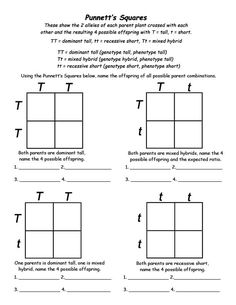 Genotypes and Punnett Square Worksheets | Squares, Free Printable ...