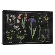 "August Grove Botanical Floral Chart II Graphic Art on Wrapped Canvas Size: 18"" H x 26"" W x 0.75"" D"