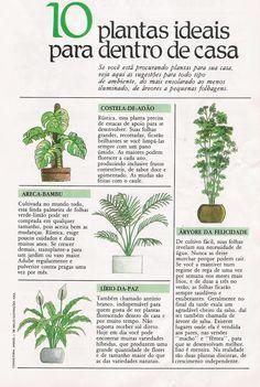 .plantas para interior. #plantasdeinterior Garden Trees, Trees To Plant, Garden Plants, House Plants, Plantas Bonsai, Inside Garden, Plant Guide, Garden Deco, Home Vegetable Garden