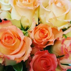 Roses, roses and more roses.