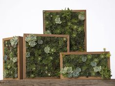 Various horizontal and vertical living pictures made with succulent cuttings. Living pictures, cuttings of assorted succulents woven together in everything from picture frames to pallet boxes, are hot among garden designers this spring as an easy, modern way to add color and texture to an outdoor space. (AP Photo/Flora Grubb Gardens, Caitlin Atkinson)