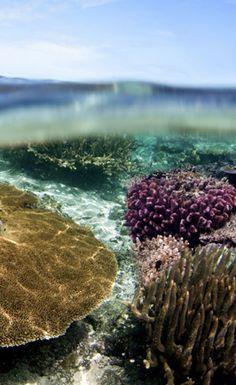 Namotu Island Fiji - best coral ever