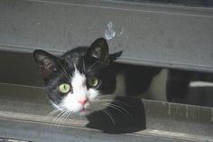 Neighbours' funny cat - http://dailyfunnypets.com/pictures/cats-pics/neighbours-funny-cat/ - Neighbours' funny cat Image by Ewan McIntosh - funny, Neighbours'