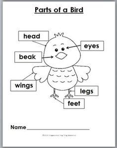 Body parts of a bird