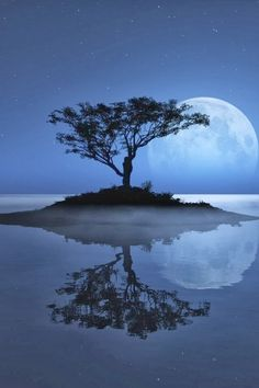 Phenomenal Reflection Pictures on Water blue moon tree Reflection Pictures, Moon Pictures, Pictures Of Water, Pictures Images, Pictures Of Trees, Nature Pictures, Bing Images, Calming Pictures, Moon Images