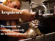 Acquiesce, v: to consent or comply passively or without protest.