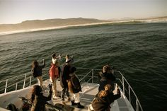 Hermanus, South Africa for all your local and tourism information; from accommodation to events, entertainment, attractions and news – ShowMe Hermanus Whale Watching Boat, Marine Life, South Africa, Attraction, Tourism, Purpose, Entertaining, Turismo, Funny