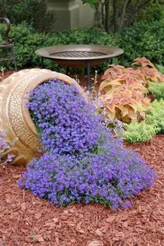 Phlox.... Love the pot and the flowers pouring out if it