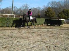 """Trot break through.  Riding the shoulders!  Would you like to see what happens with a horse that is moving up from a green horse into more of a training level balance at the trot?  Now you can see it happen right here!"""