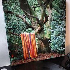 James Holden & the Animal Spirits 🙌🙌🙌 Spirit Animal, Vinyl Records, Music, Animals, Collection, Instagram, Musica, Musik, Animales