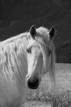 Horse photography equine art nature photo by MitchMcfarlanePhotos