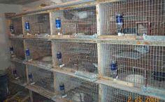 Pigeon Loft Design, Lofts, Animals, Loft Room, Loft, Animales, Animaux, Animal Memes, Animal