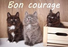Bon Courage, Encouragement, Messages, Cats, Julien, Animals, Cats And Kittens, Dog Cat, Couple Sayings