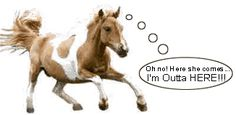Teach your horse to come when called!