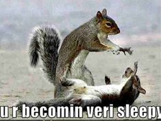 animal humor | ... Size | More squirrel funny animal humor 20272050 689 519 | Source Link