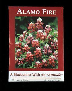 Alamo Fire Texas Bluebonnet Seeds